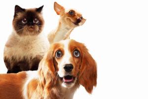 Cães e gatos: como está a energia do seu animalzinho?